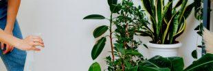Les soins à apporter aux plantes d'intérieur en mars