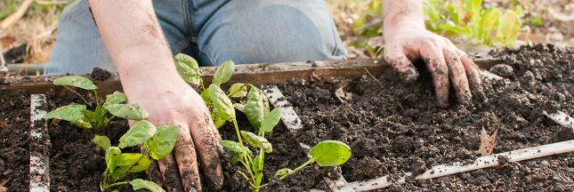 Jardinage – En mars, plantez votre potager en carrés