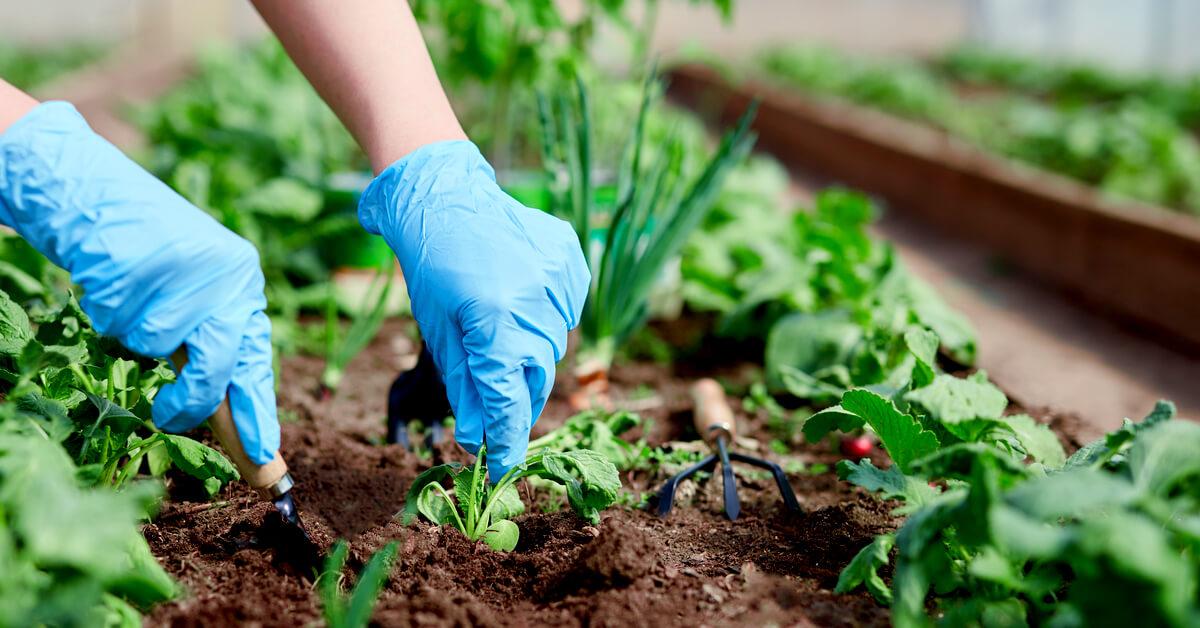 Quels légumes cultiver avec un pH du sol acide ou basique ?