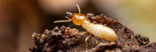 Si les humains vivaient comme des... 'Termites cathédrales'