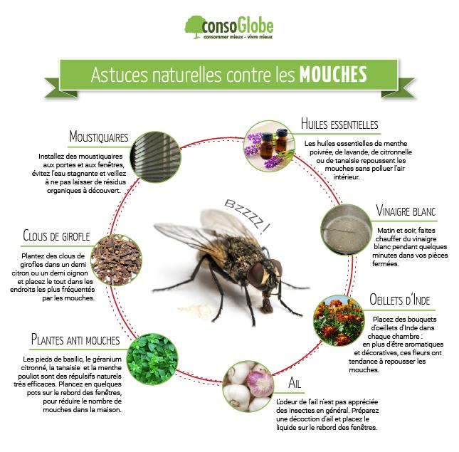 Toutes les astuces naturelles contre les mouches