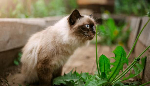 éloigner chats potager
