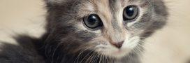 Coronavirus: des chiens et chats désinfectés à la javel