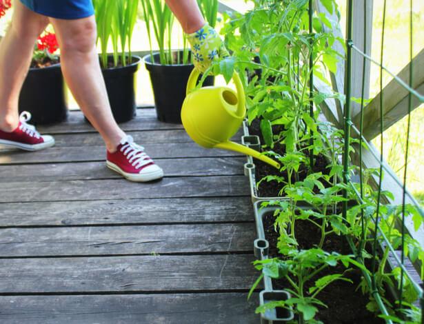 faire pousser des tomates sur son balcon