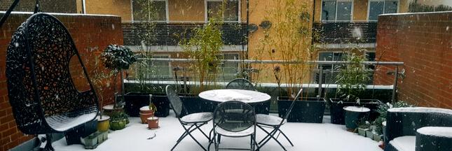 Plantes en pot – Quelles précautions prendre avant l'hiver?