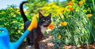 répulsif chat jardin