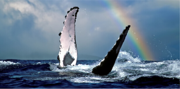 sauvegarde des océans