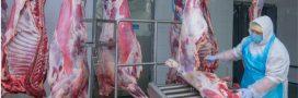 Les abattoirs, nouveaux foyers de contamination covid-19?