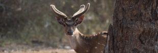 Déconfinement : des animaux moins farouches alerte l'Office National des Forêts