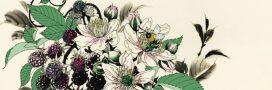 Sélection livre – Ce que les plantes ont à nous dire – François Couplan