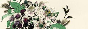 Sélection livre - Ce que les plantes ont à nous dire - François Couplan