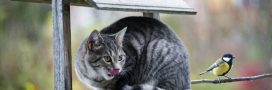 Les chats errants dans le collimateur des chasseurs