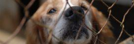 Confinement: des centaines d'animaux sauvés de l'euthanasie par la SPA