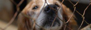 Confinement : des centaines d'animaux sauvés de l'euthanasie par la SPA