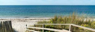 Des plages fermées cet été pour protéger faune et flore