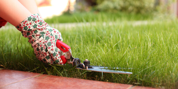 tondre la pelouse le dimanche