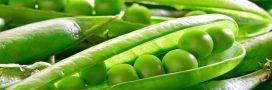 Le petit pois, un légume riche en vitamines et en minéraux