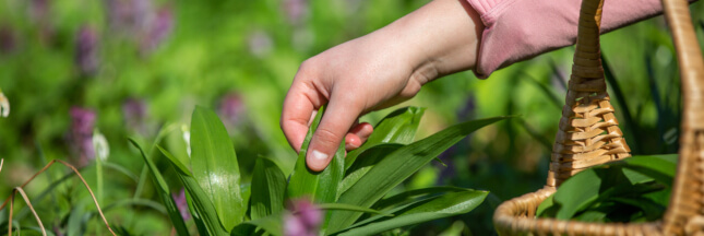 Plantes sauvages: nos conseils pour une cueillette sans risque