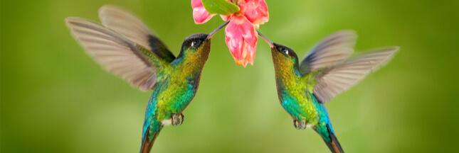 Abeilles, papillons et plantes indigènes, citoyens d'honneur à Curridabat au Costa Rica