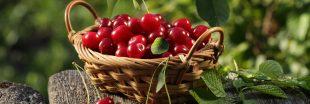 Conseils jardinage : les gestes de juin au jardin bio et au potager