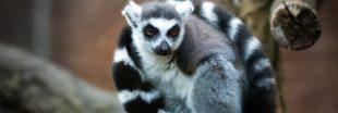 Benoît Quintard, vétérinaire au zoo de Mulhouse, nous parle des animaux confinés