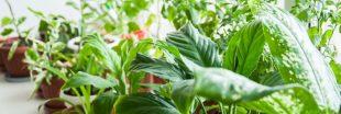 Les soins à apporter aux plantes d'intérieur en juin