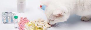 Peut-on vraiment vendre son animal de compagnie à un laboratoire ?