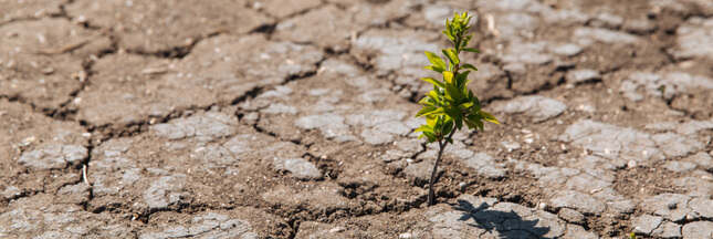 Convention citoyenne pour le climat: des décisions décevantes