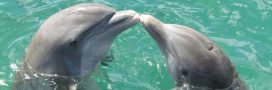 Si les humains vivaient comme des dauphins…