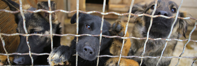 Pour la 11ème année c'est la fête de la viande de chien à Yulin