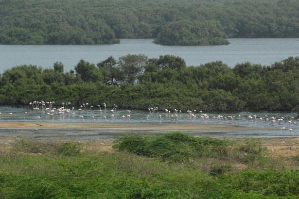 pakistant restauration des écosystèmes