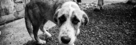 La France bat son record de cruauté envers les animaux
