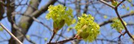 Réchauffement climatique: les arbres rétrécissent!