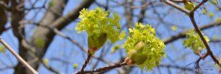 Réchauffement climatique : les arbres rétrécissent !