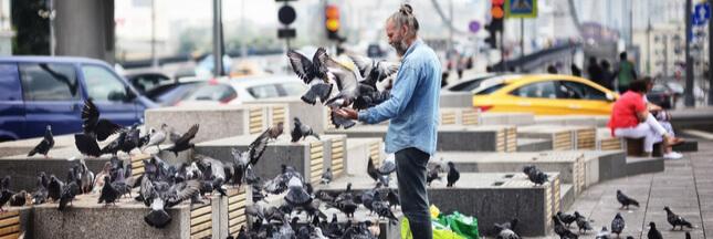 Si les humains vivaient comme des pigeons…