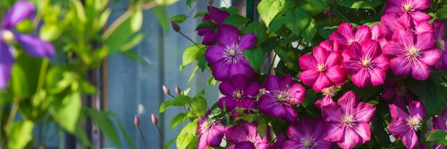7 plantes brise-vue pour qu'on ne puisse plus voir chez vous