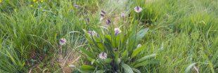 14 plantes sauvages comestibles : guide pratique