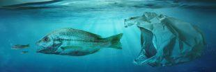 Au fond des océans, les déchets plastiques ne meurent jamais