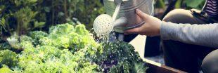 Au jardin : que planter en juillet, que semer, le potager et le verger