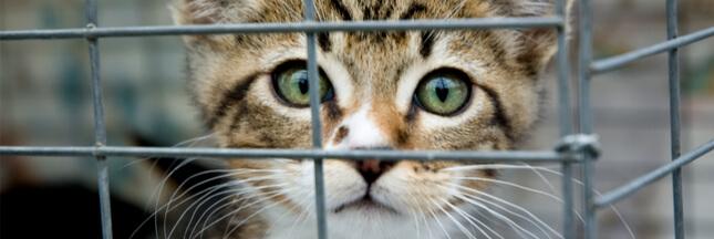 Vers la création d'un secrétariat d'État à la condition animale ?
