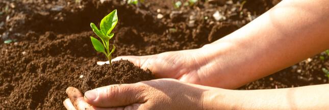 Les jardiniers amateurs vont pouvoir acheter des semences paysannes