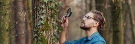 Botanique: testez vos connaissances grâce à The Plant Game