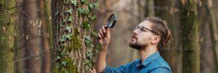 Botanique : testez vos connaissances grâce à The Plant Game