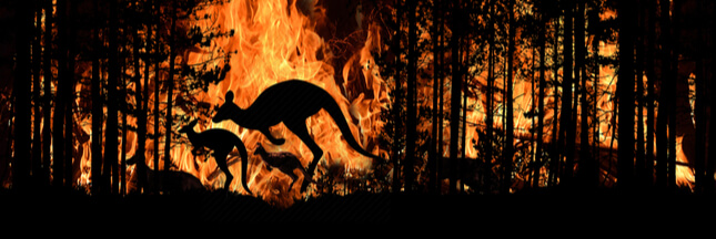 3 milliard d'animaux victimes des incendies en Australie