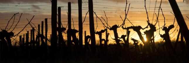 La filière viticole en crise : l'arrachage des vignes, la bonne solution dans le bordelais ?