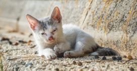Un bébé animal blessé, qui appeler et que faire?