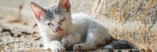 Un bébé animal blessé, qui appeler et que faire ?