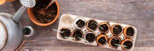 Coquille d'oeuf au jardin, les bons plans du jardinier bio