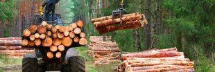 Poumon vert de l'Europe, les forêts sont abattues en masse
