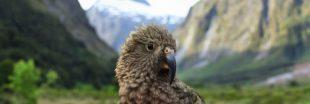 Si les humains vivaient comme des perroquets...